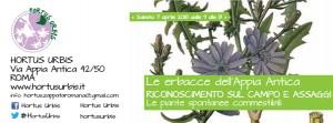 locandina 2017 10 01 piante spontanee